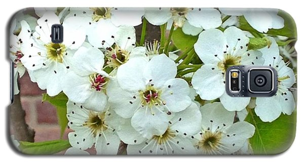 Crabapple Blossoms Galaxy S5 Case