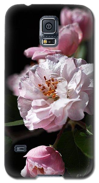 Crabapple Flowers Galaxy S5 Case