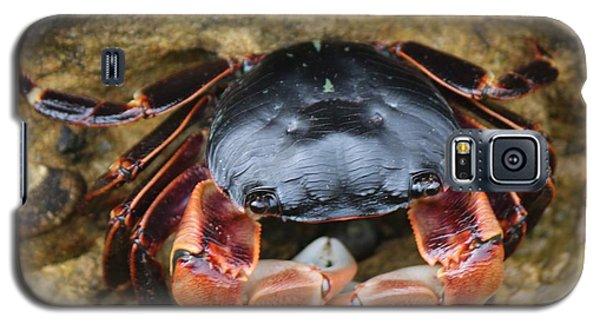 Crabby Pants  Galaxy S5 Case