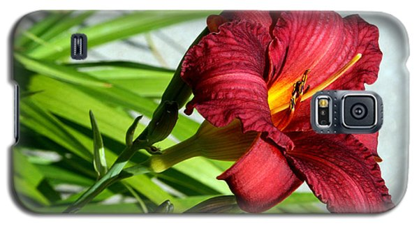Cranberry Colored Lily Galaxy S5 Case