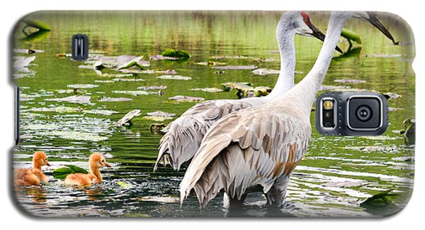 Crane Family Goes For A Swim Galaxy S5 Case