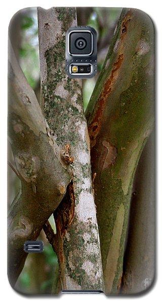 Crape Myrtle Branches Galaxy S5 Case by Peter Piatt
