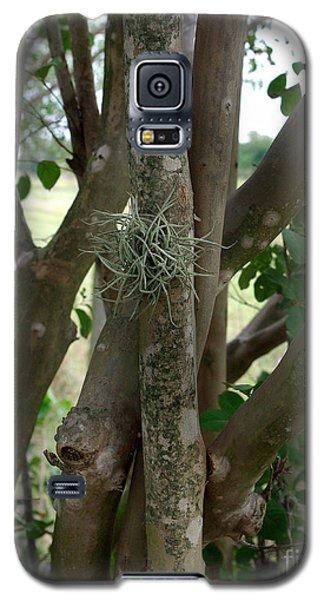 Crape Myrtle Growth Ball Galaxy S5 Case by Peter Piatt