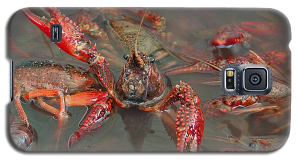 Crawfish Boil Galveston Style Galaxy S5 Case