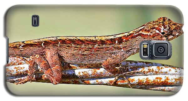 Galaxy S5 Case featuring the photograph Crawling Lizard by Cyril Maza