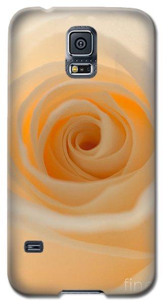 Cream Rose Galaxy S5 Case