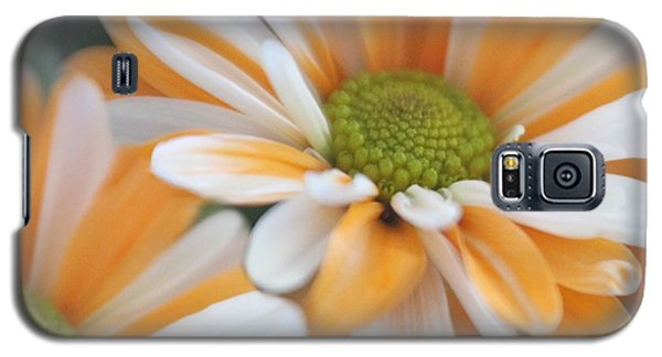 Galaxy S5 Case featuring the photograph Creamsicle Daisies by Mary Lou Chmura