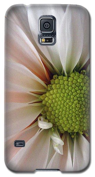 Galaxy S5 Case featuring the photograph Creamsicle by Jean OKeeffe Macro Abundance Art