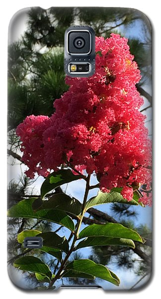 Crepe Myrtle And Mr. Pine Galaxy S5 Case