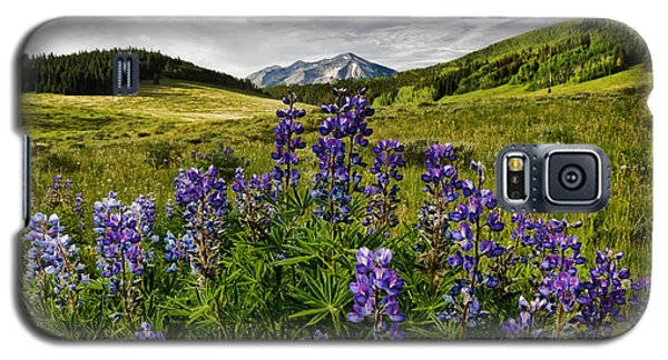 Galaxy S5 Case featuring the photograph Crested Butte Lupines by Ronda Kimbrow