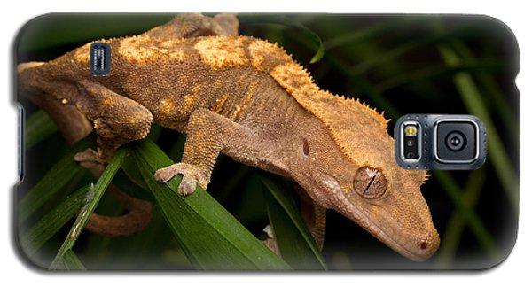 Crested Gecko Rhacodactylus Ciliatus Galaxy S5 Case