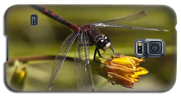 Galaxy S5 Case featuring the photograph Crimson-ringed  White Face Dragonfly On Flower by Lee Kirchhevel