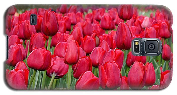 Crimson Tulips  Galaxy S5 Case by Richard Reeve