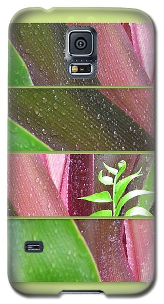 Galaxy S5 Case featuring the photograph Crinum Lily Collage2 by Darla Wood