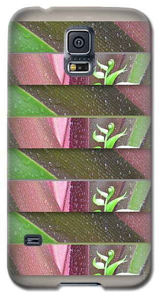 Galaxy S5 Case featuring the photograph Crinum Lily Collage3 by Darla Wood