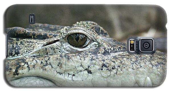 Galaxy S5 Case featuring the photograph Crocodile Animal Eye Alligator Reptile Hunter by Paul Fearn
