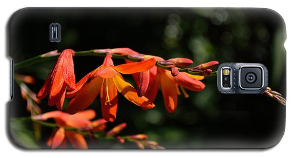 Crocosmia 'dusky Maiden' Flowers Galaxy S5 Case