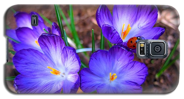 Crocus Flowers And Ladybug Galaxy S5 Case by Debra Thompson