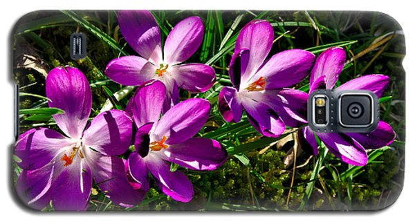 Crocus In The Grass Galaxy S5 Case