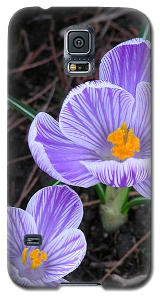 Crocus Galaxy S5 Case by John Wartman