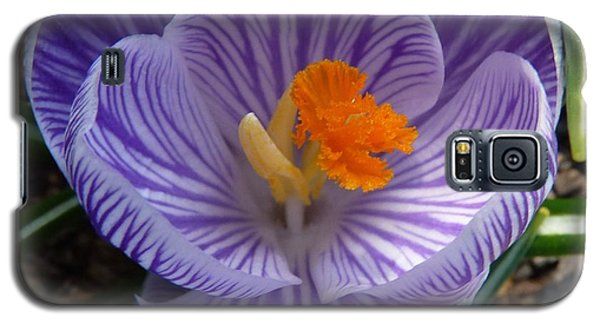 Galaxy S5 Case featuring the photograph Crocus Upclose by Jeanette Oberholtzer
