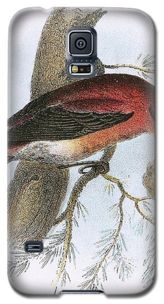 Crossbill Galaxy S5 Case
