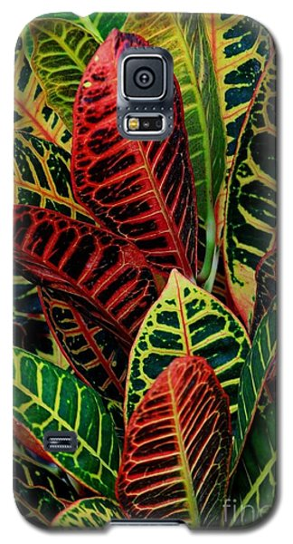 Galaxy S5 Case featuring the photograph Croton Leafscape by Larry Nieland