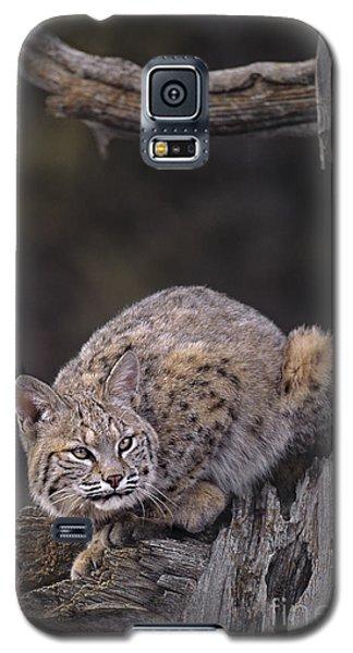 Crouching Bobcat Montana Wildlife Galaxy S5 Case
