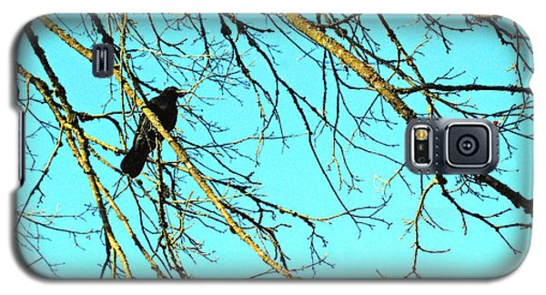 Galaxy S5 Case featuring the photograph Crow by Kjirsten Collier