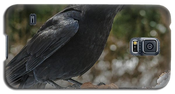 Crow On Feeder Galaxy S5 Case by Jim Moore