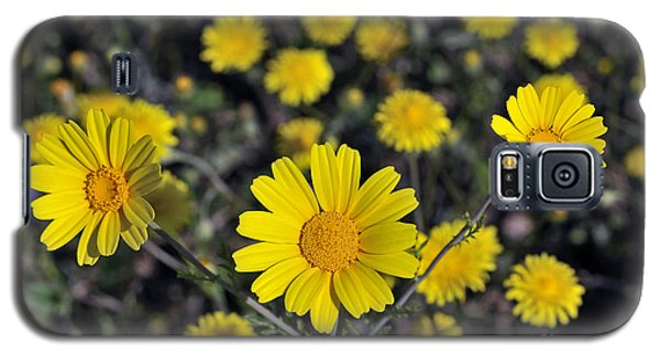 Galaxy S5 Case featuring the photograph Crown Daisies by George Atsametakis