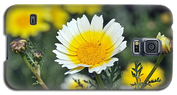 Galaxy S5 Case featuring the photograph Crown Daisy Flower by George Atsametakis