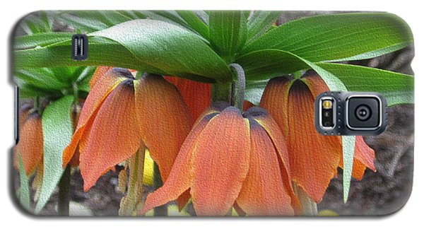 Crown Imperial Fritillaria Galaxy S5 Case by Kathie Chicoine