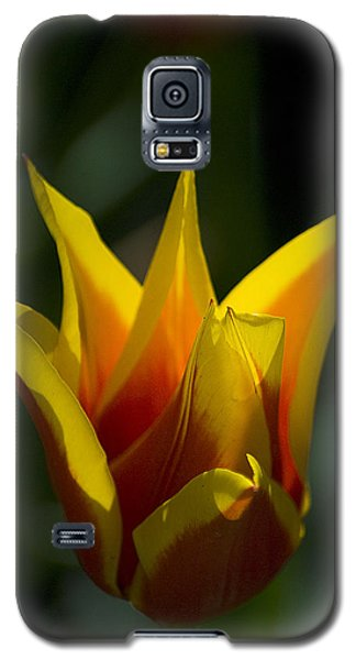Galaxy S5 Case featuring the photograph Crown Tulip by Yulia Kazansky