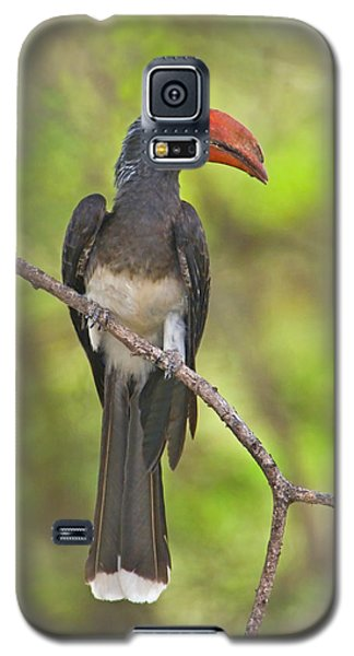 Crowned Hornbill Perching On A Branch Galaxy S5 Case