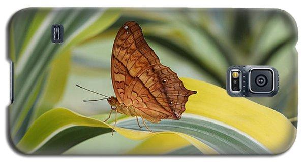 Cruiser Butterfly Galaxy S5 Case
