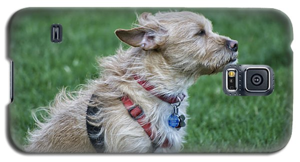 Galaxy S5 Case featuring the photograph Cruz Enjoying A Warm Gentle Breeze by Thomas Woolworth
