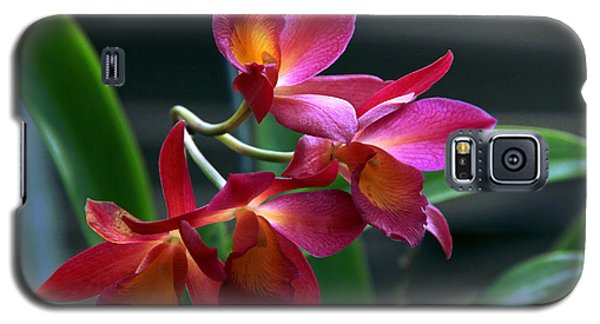 Galaxy S5 Case featuring the photograph Ctna New River Orchid by Greg Allore