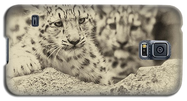 Cubs At Play Galaxy S5 Case