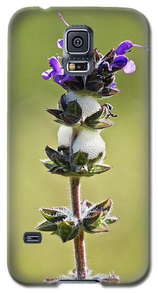Cuckoo-spit On Clary (salvia Verbenaca) Galaxy S5 Case