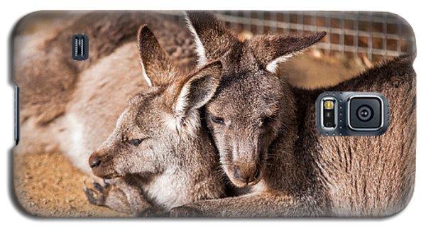 Cuddling Kangaroos Galaxy S5 Case
