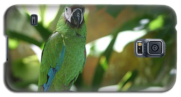 Curacao Parrot Galaxy S5 Case by Living Color Photography Lorraine Lynch