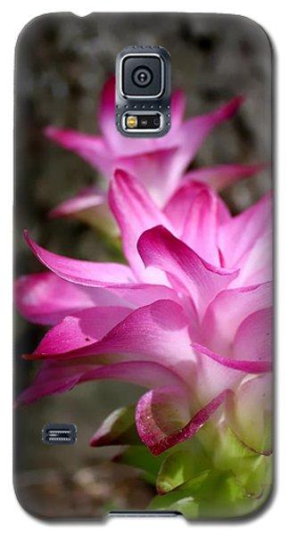 Curcuma Galaxy S5 Case by Debra Forand