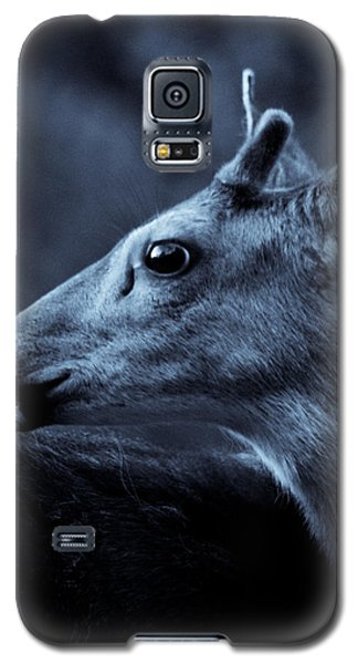 Galaxy S5 Case featuring the photograph Curious  by Adria Trail