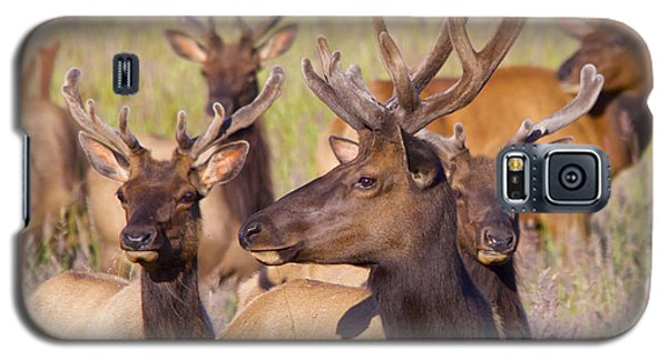 Galaxy S5 Case featuring the photograph Curious Bull Elk by Todd Kreuter