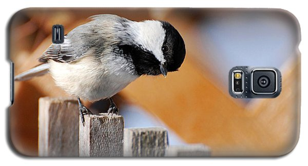Curious Chickadee Galaxy S5 Case by Christina Rollo