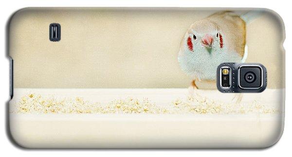 Curious Cordon Bleu Finch  Galaxy S5 Case by Lisa Knechtel