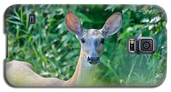 Curious Doe Galaxy S5 Case