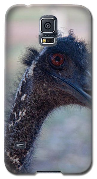 Galaxy S5 Case featuring the photograph Curious Emu by Carole Hinding