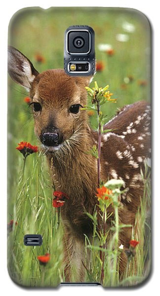 Curious Fawn Galaxy S5 Case